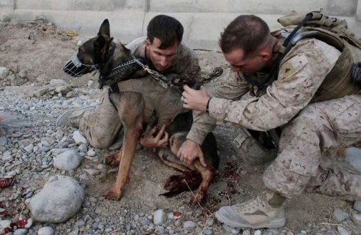 Wounded MWD